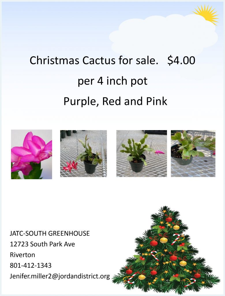 Flyer of Christmas cactus
